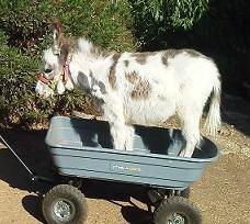 Maddi in wagon